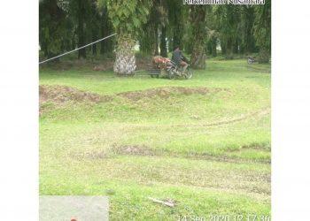 Tampak para pemanen kebun Bangun PTPN III harus mengangkut TBS memakai sepeda motor gandeng. Senin (14/09/2020)